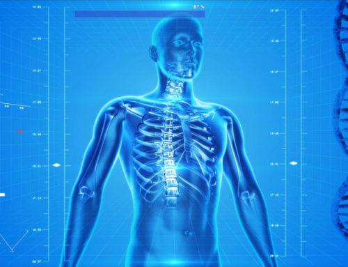 Funktion vom Stoffwechsel und der Fettverbrennung