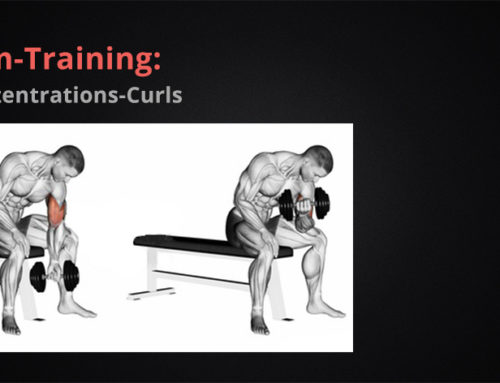 Arm-Training:  Konzentrations-Curls